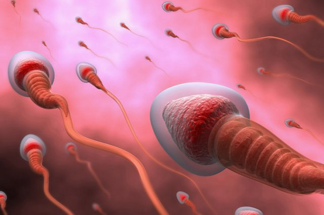 Консервация сперматозоидов женским организмом так