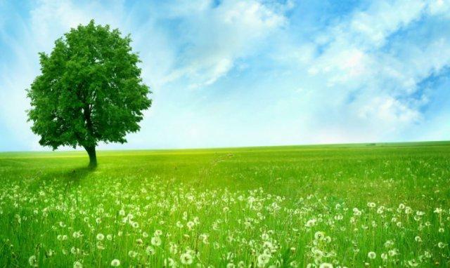 Как экологическая обстановка влияет на аллергию? 2