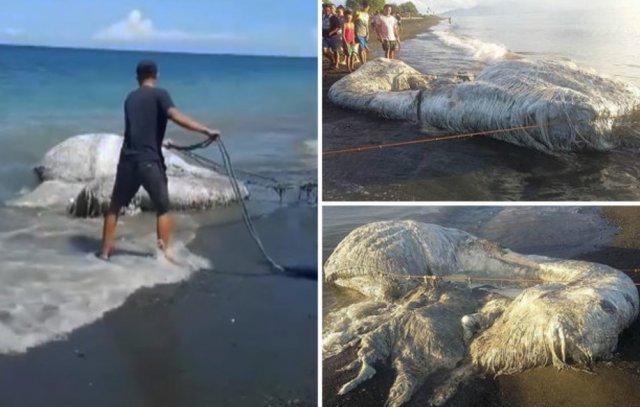 Волосатое морское животное испугало жителей Филиппин 2